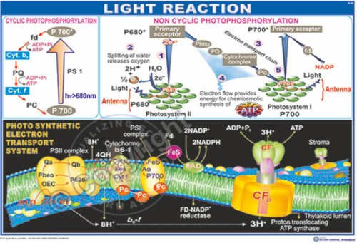 B-38_Light Reaction - CC