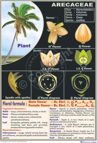 B-40_Arecaceae - CC