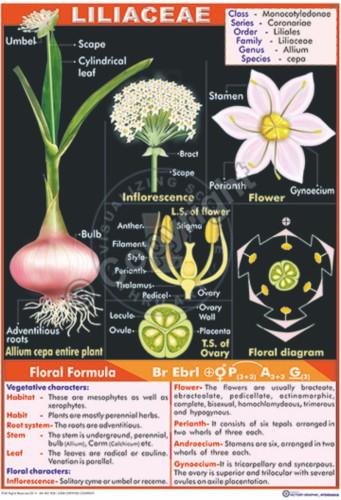 Plant Cell Diagram Chart Diagram Charts Diagrams Graphs