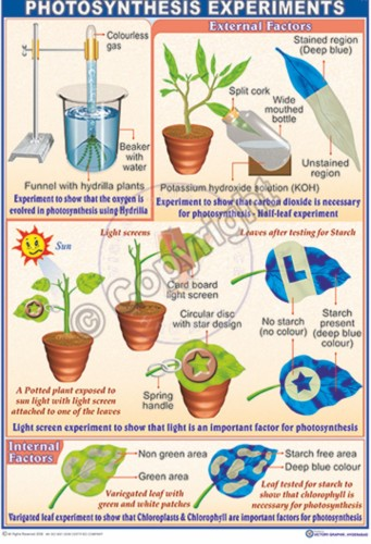 B-85 Photosynthesis CC