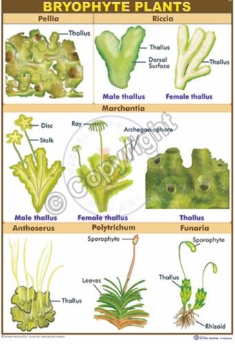 B-89_Bryophyte Plants CC