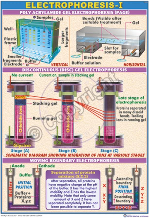 BC-13_Electrophotesis unit I - CC