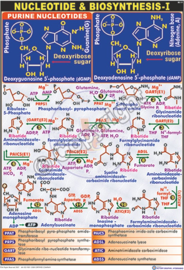 BC-17_Nucleotide Biosynthesis-I - CC