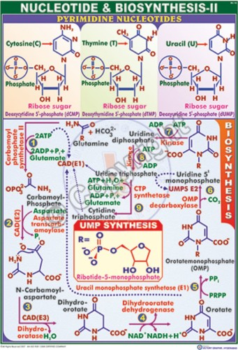 BC-18_Nucleotides Biosynthesis - II - CC