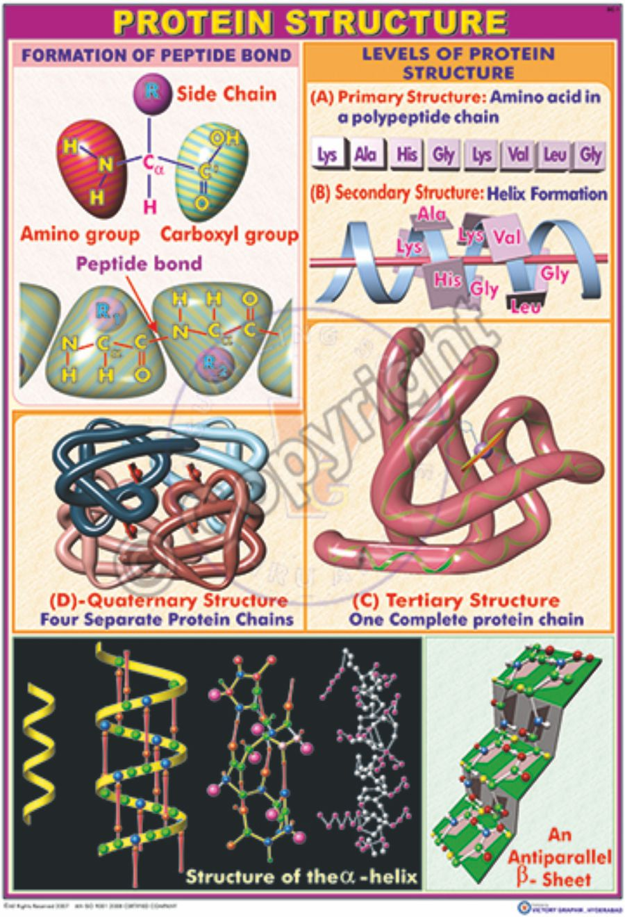 lab manual in biochemistry immunology and biotechnology