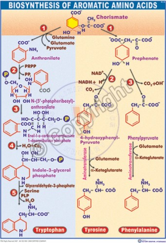 BC-23_Biosynthesis of aromatic amino acids - CC