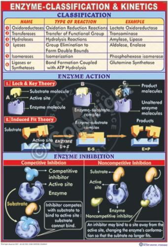 BC-8_Enzyme - CC