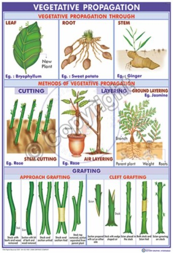 BI-11_methods of vegetative pro. -1 Eng -CC