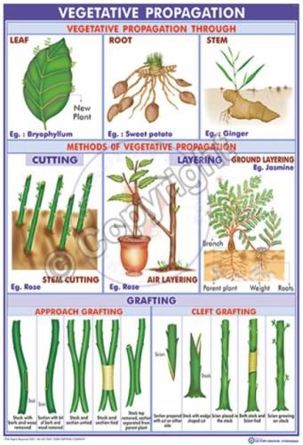 BI-11_methods of vegetative pro. -1 Eng -CC