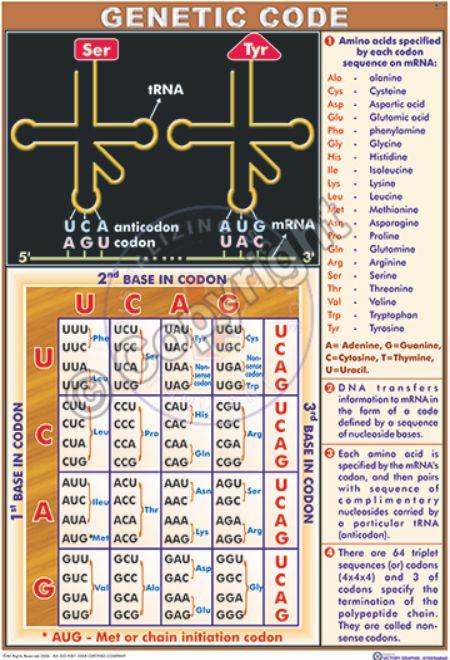 BI-14_Genetic code - CC
