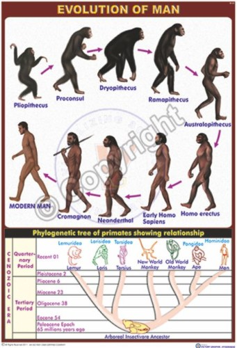 BI-22_Evolution of man - Final - CC