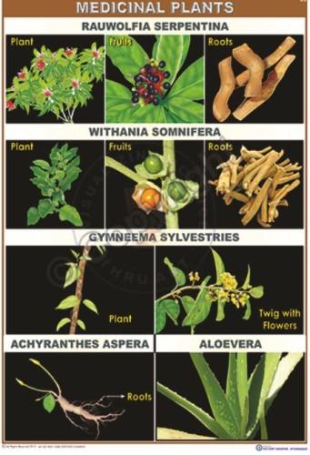 BI-35_Medicinal plants-I_100x70 CC