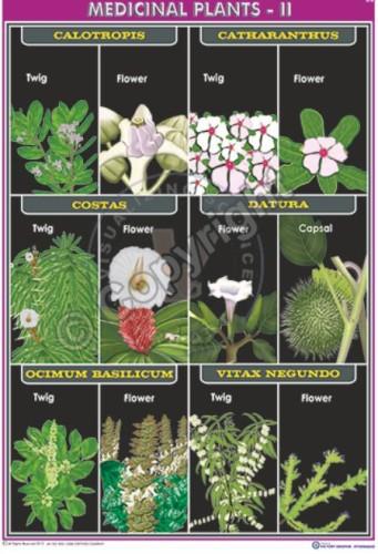 BI-36_medicinal plants-II_100x70 CC