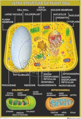 BI-8_Plant cell_final 2013 - CC