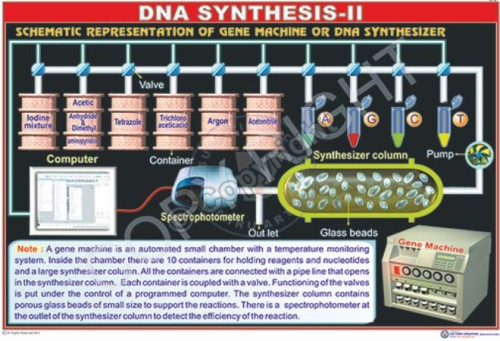 BT-6_DNA Sythesis-II- Final