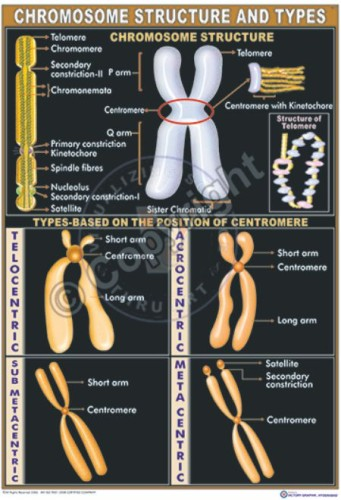 Bi-3_Chromosome Structure and types - CC