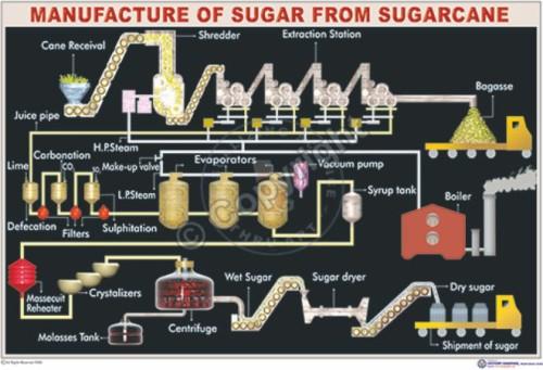 C-13_Sugarcane