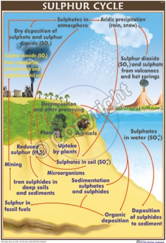 EC-11_Sulphur Cycle