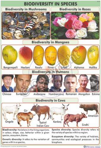 EC-19_Biodiversity in Species Final - CC