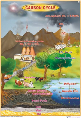 EC-2 _Carbon Cycle - Final - CC