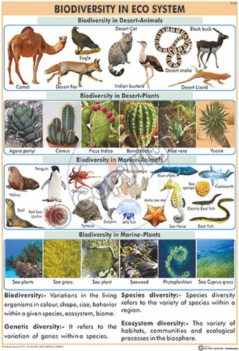 EC-20_Biodiversity in Eco system Final - CC
