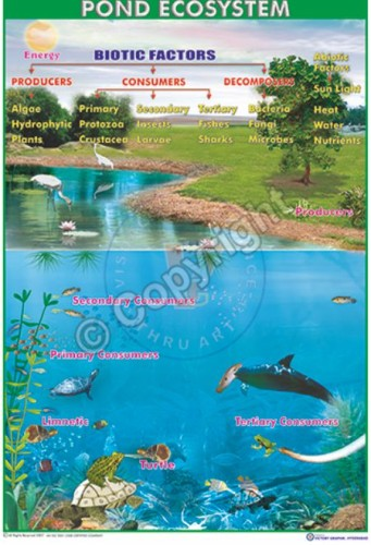 Ec-10_Pond ecosystem_100x70