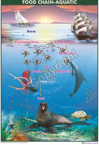 Ec-8_food chian acuatic_100x70