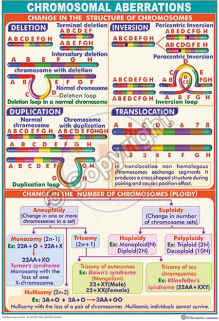 GT-1_Chromosomal aberrations - CC