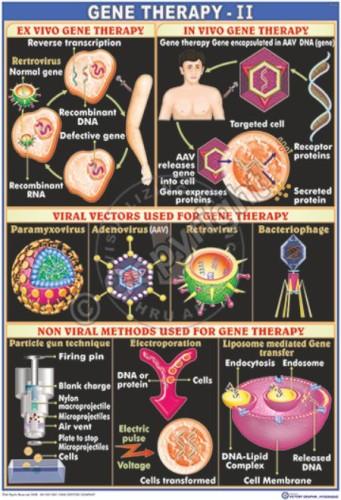 GT-20_Gene Therapy -II - CC