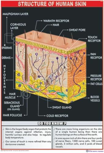 HA-20_Human Skin_100x70_CC