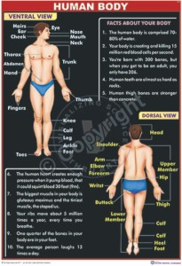 HA-36 Human Body CC