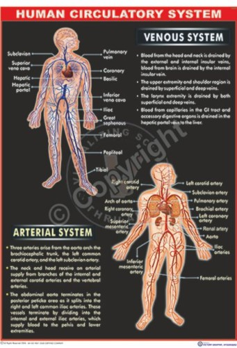 HA-5 Human Circulation - CC