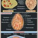 MB-10 Pathogenic Protozoa – |