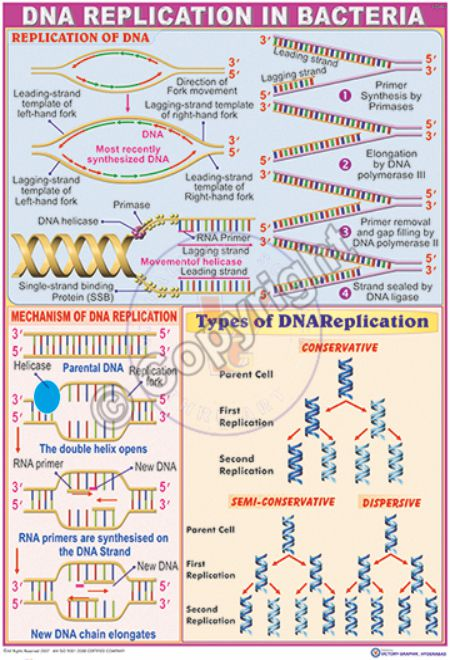 MB-14_DNA replication new-CC