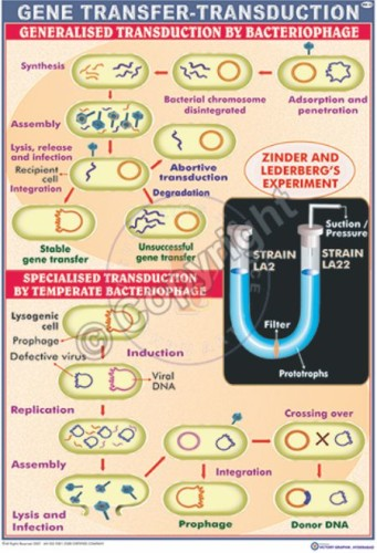 MB-23_Gene Transduction -CC