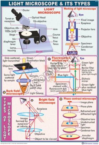 MB-30_Light micro scope - CC