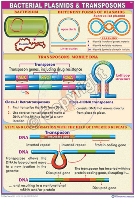 MB-5_Bacterial plasmids & transposons - CC