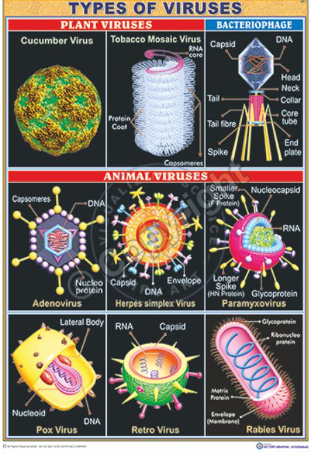 MB-7_types of viruses CC