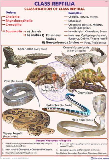 Class Reptilia Examples 67029 | LOADTVE