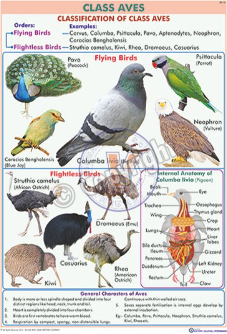 victory graphik zp phylum charts