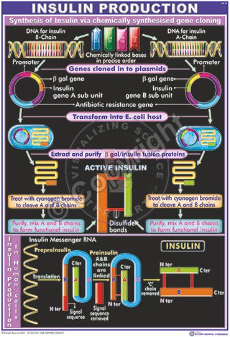 BT-16_Insulin Production - CC
