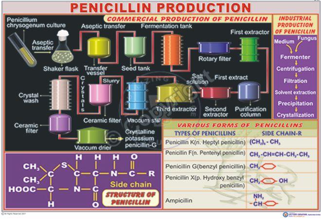 BT-21_Pencillin production CC