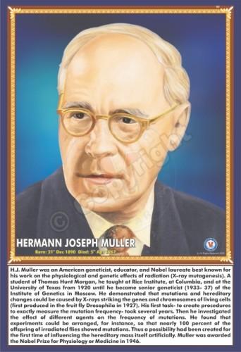 SP-160 HERMANN JOSEPH MULLER